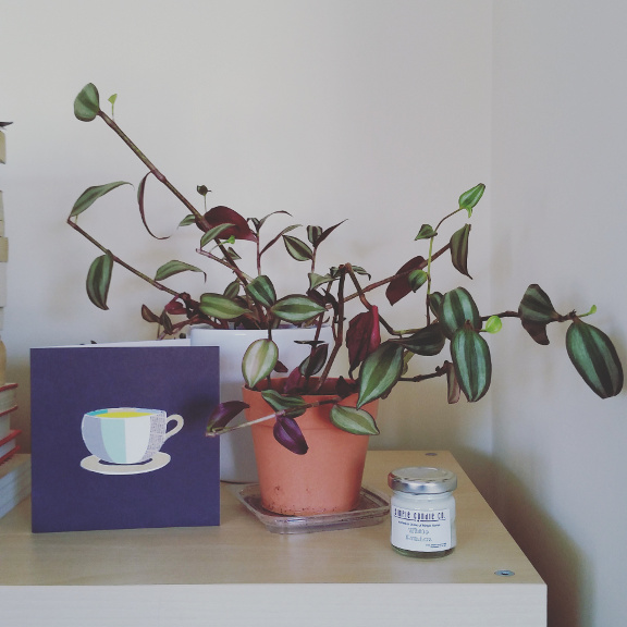 houseplants, zebrina tradescantia